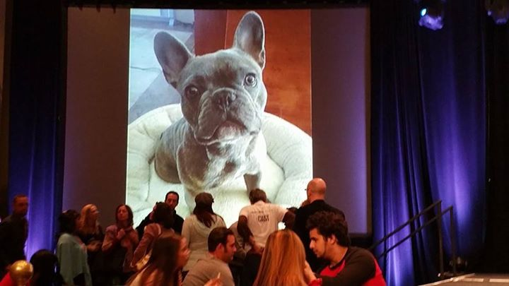 zeus the superhero frenchie on screen at event