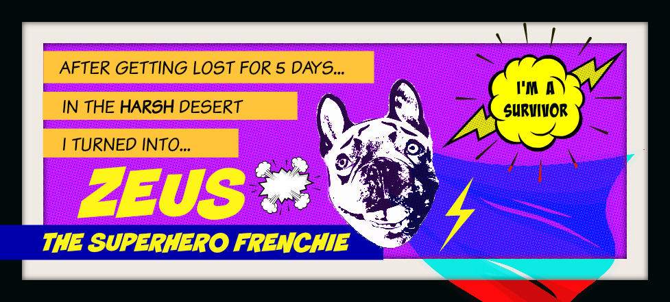 Zeus the Superhero Frenchie